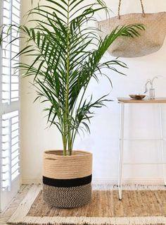 enviar plantas de regalo, plantas de regalo a domicilio, floristería online, plantas bonitas para regalar, floristería España, floristería internacional