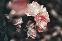 flores para entierro, coronas blancas para difunto, ramo de condolencias, ramos para funerales, corona funeraria